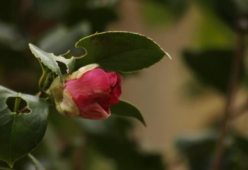 20091122_5